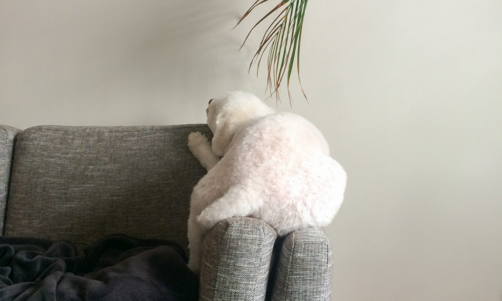 Dog with a palm plant
